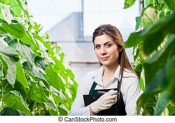 trabajo, mujer, joven, invernadero
