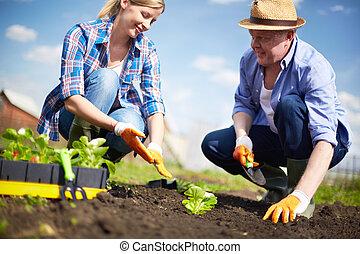 trabalhando, agricultores