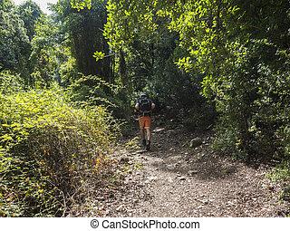 traccia, segno, scia, uomo, sardegna, paesaggio, indietro, escursionista, do, mediterraneo, estate, verde, gorropu, gola, supramonte, italy., montagne, andando gita, nuoro, gola, foresta, vegetazione