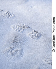 trace on the snow
