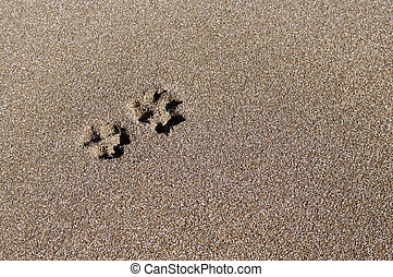 TRACE - Trace of a dog on sand