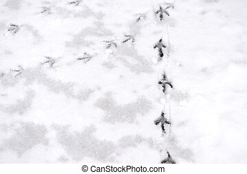 Traces of bird paws on the snow. Winter background