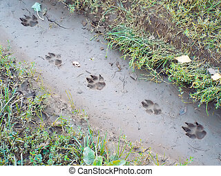 traces of large dog imprinted in mud