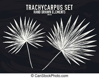 trachycarpus, コレクション, 手, チョーク, ベクトル, 引かれる