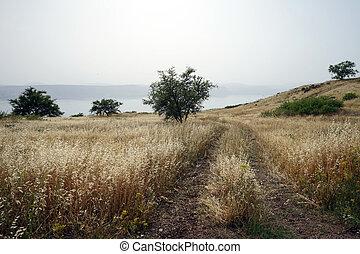 Track near lake