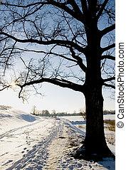 Track near oak