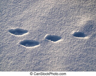 Track of hare - It is easily to recognize track of hare for...