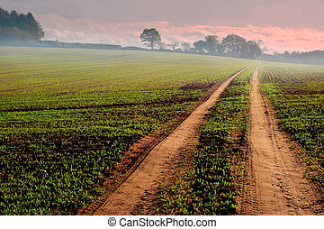 track through farmland