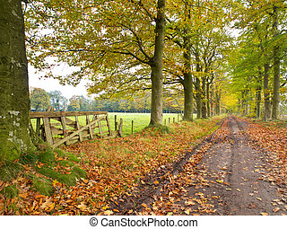 Track with Gate and Forest lane in Fall