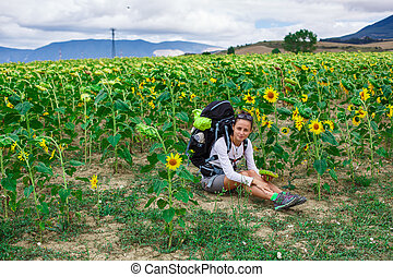 Tracker in field of sunflowers - Tracker with a backpack in...
