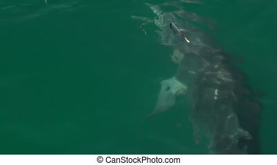 Tracking a dolphin