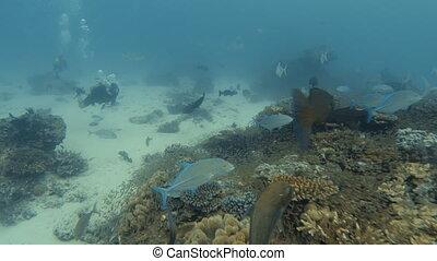 Tracking a scuba diver - A tracking shot of a scuba diver...