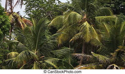 Tracking shot of palm tree - A left to right tracking shot...