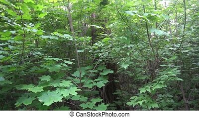 Tracking Shot Through Forest Trees Woods Sun Shining Through Trees Nature Beauty Aerial Close Up New Beginning Afterlife Spirituality Renewal Awakening Concept Drone Shot