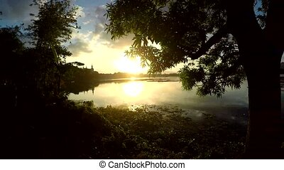 Tracking shot view of trees and vegetation on mountain lake...