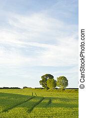 Tracks in field of wheat.