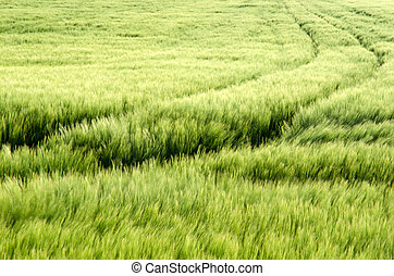 Tracks in soft field