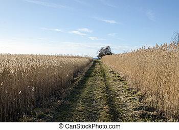 Tracks through the reeds