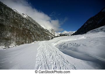 Tracks through the snow