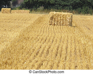tracks to the bale