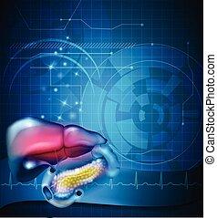 tracto gastrointestinal, tratamiento, diseño abstracto, hígado, estómago, y, otro, circundante, órganos, normal, cardiograma, en, el, plano de fondo