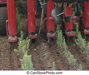 Tractor blanch fir seedlings. - Tractor blanch christmas...