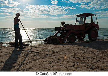 Tractor cleaning seaweed on sea coast in morning