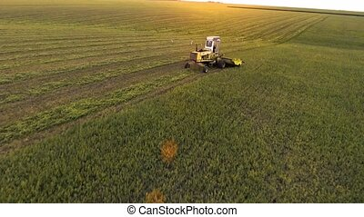 tractor cutting the grass in straight lines. - tractor...
