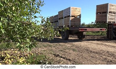 tractor drive with wooden box full of apple harvest. 4K -...