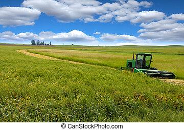 tractor, en, el, trigo, campos