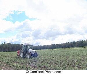 Tractor fir tree seedling