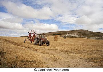 Tractor in a cornfield