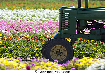 Tractor in field of flowers - A tractor in amongst a row of ...