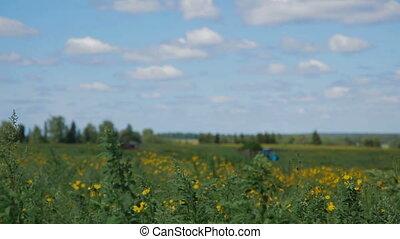 Tractor in field Russia