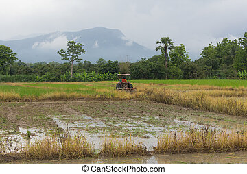 tractor in rice field, Mechanism farmer rice cultivation