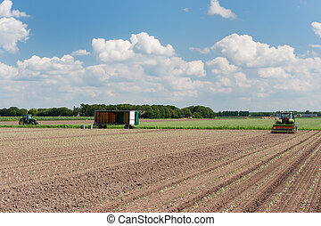 Tractor in the fields