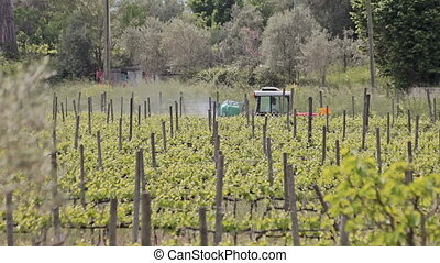 Tractor in the vineyard