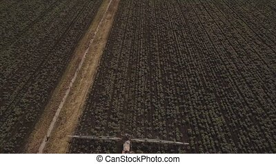 Tractor is spraying fertilizers potato field.Aerial video. -...