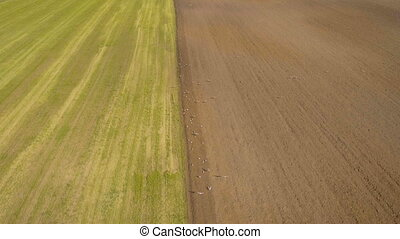 Tractor plowing a field.Aerial video. - Farm tractor plowing...