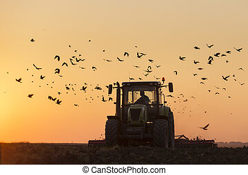 Tractor Plowing in dusk on sunset with crows