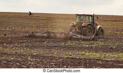 Tractor plowing land for sowing cereal crop, evening rural...