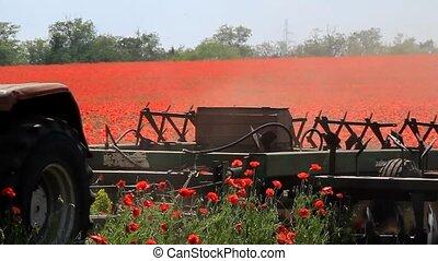 Tractor plowing poppy field - Tractor destroy poppy fields,...