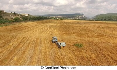 Tractor rides in the field with the harvested crop....
