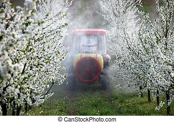 tractor sprays insecticide in cherry orchard farming