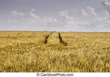 tractor tracks in field