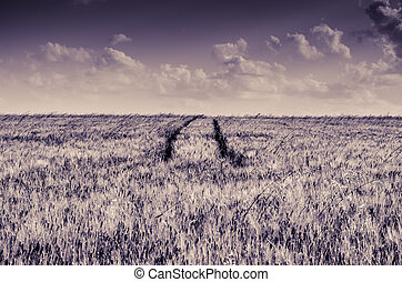 tractor tracks in field