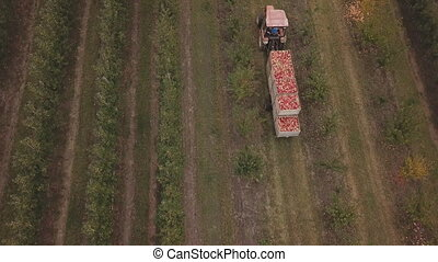 tractor with a full trailer of apples