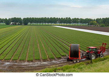 Tractor with irrigation system on a bulb field in Abbenes.