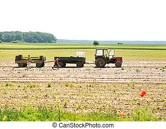 tractor with plow on field