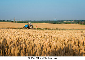 Tractor working on a wheat field